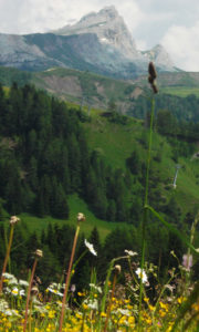 Setsas-on-the-Pralongia-plateau - Sketching & Painting Holidays in Italy